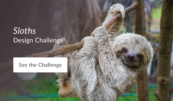 See the Sloths Design Challenge