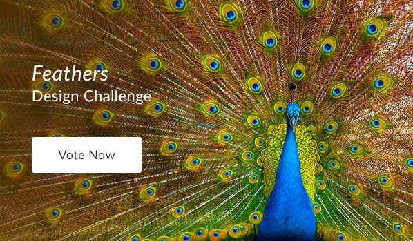 See the Feathers Design Challenge