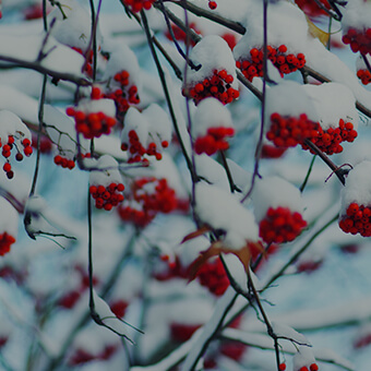 Winter Flora Design Challenge