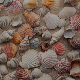 Seashells Design Challenge
