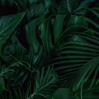 Moody Tropical Flora Wallpaper Design Challenge